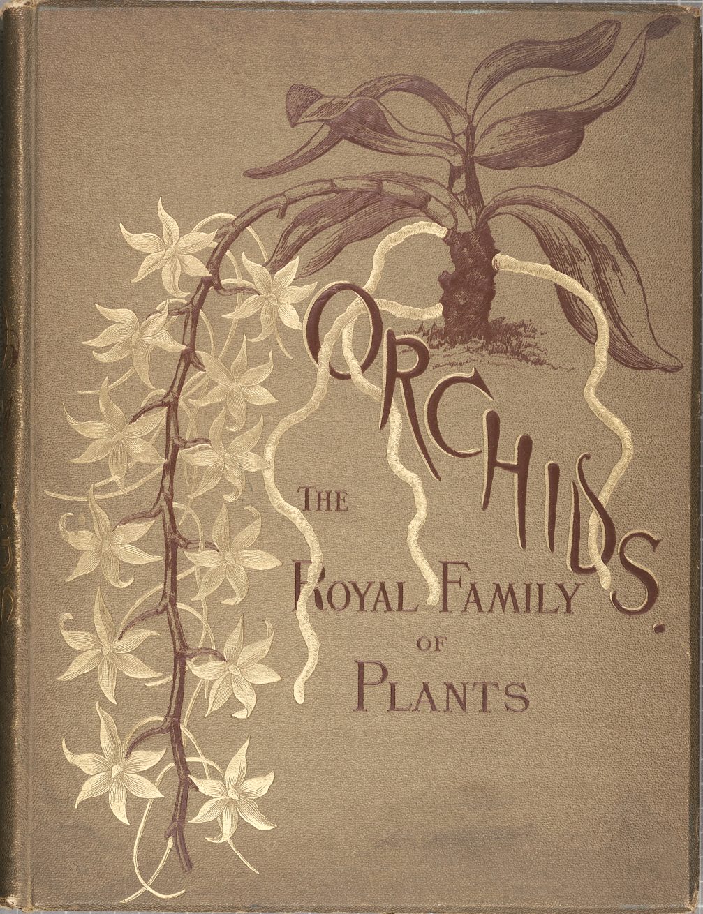 Orchids-Royal Family of Plants-Harriet
